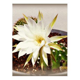 Cactus Bloom Post Card