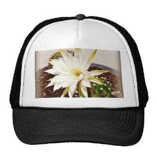 Cactus Bloom Trucker Hat