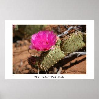 Cactus Bloom, Zion National Park Poster