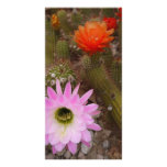 cactus blooms custom photo card