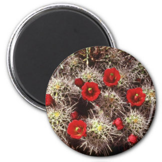 Cactus blooms in the spring Pink flowers Fridge Magnets