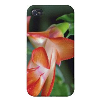 Cactus blossom, Edmonton, Canada flowers Cases For iPhone 4