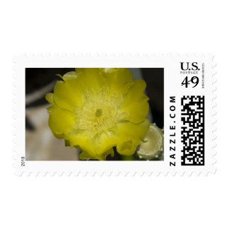 Cactus Blossom Postage Stamp