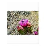 Cactus Blossum Postal