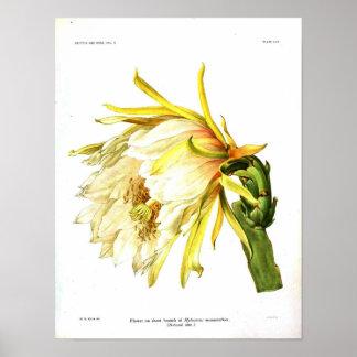 Cactus botánico del vintage impresiones