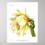 Cactus botánico del vintage póster