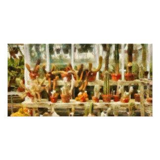 Cactus - Cactus for sale Photo Card