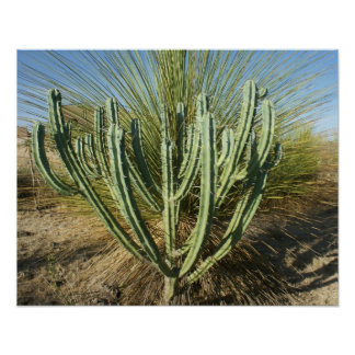 Cactus Candelabra Poster