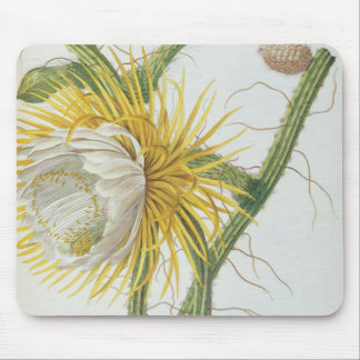 Cactus: Cereus, from Trew's 'Plantae Selectae' 175 Mouse Pad
