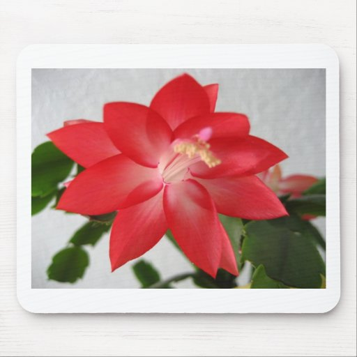 cactus,christmas cactus mouse pad