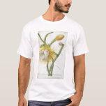 """Cactus: Cirio, Plantae Selectae"""" 175 de Trew de """" Playera"""