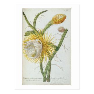 "Cactus: Cirio, Plantae Selectae"" 175 de Trew de "" Postales"