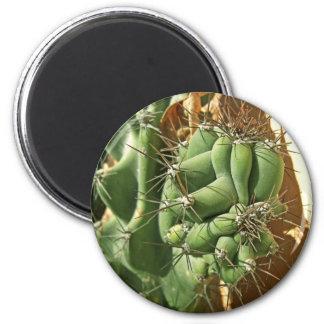 Cactus Close-up 3 2 Inch Round Magnet