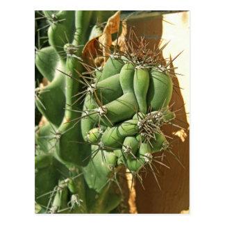 Cactus Close-up 3 Postcard