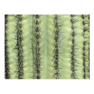 Cactus Close-up Postcard