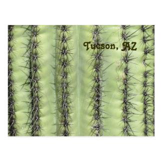 Cactus Close-up Postcards
