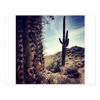 Cactus Closeup Postcard