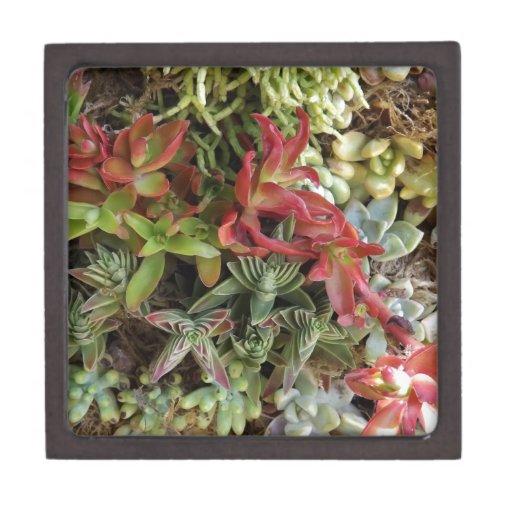 Cactus coloridos cajas de joyas de calidad