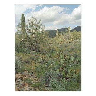 Cactus Coloring Arizona Desert Photo Postcard