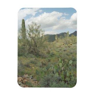 Cactus Coloring Decorative Desert Magnet