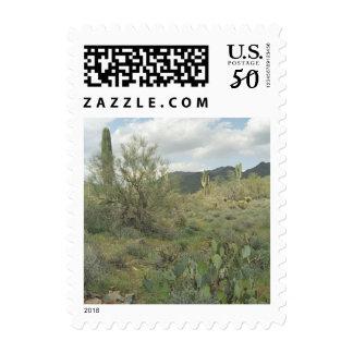 Cactus Coloring Sonoran Desert Photo Postage Stamp