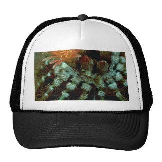Cactus Colors Trucker Hat