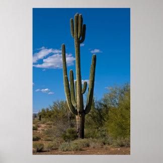 Cactus con la cabeza 3992 impresiones
