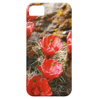 Cactus con las floraciones rojas hermosas funda para iPhone 5 barely there