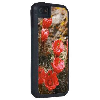 Cactus con las floraciones rojas hermosas funda para iPhone 5 tough xtreme