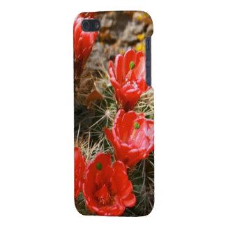 Cactus con las floraciones rojas hermosas iPhone 5 fundas