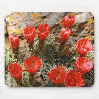 Cactus con las floraciones rojas hermosas tapete de raton