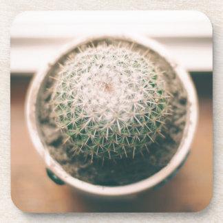 cactus beverage coasters