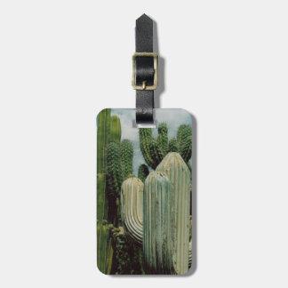 Cactus de Arizona Etiqueta Para Equipaje