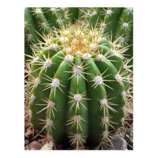 Cactus de Arizona Postal