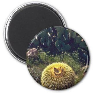 Cactus de barril con los hermanos imán