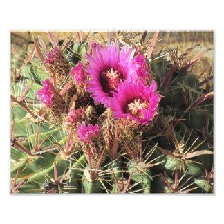Cactus de barril de la lengua del diablo florecien cojinete