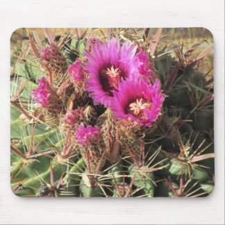 Cactus de barril de la lengua del diablo florecien tapete de raton