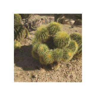 Cactus de barril de oro impresión en madera