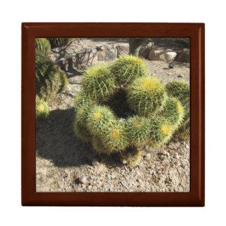 Cactus de barril de oro joyero cuadrado grande