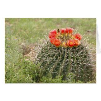Cactus de barril del anzuelo en la floración tarjetón