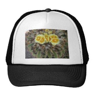 Cactus de barril en la floración gorros bordados