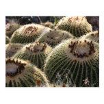 Cactus de barril en luz de la madrugada tarjetas postales