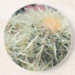 Cactus de barril espinoso posavasos diseño