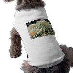 Cactus de barril espinoso ropa perro