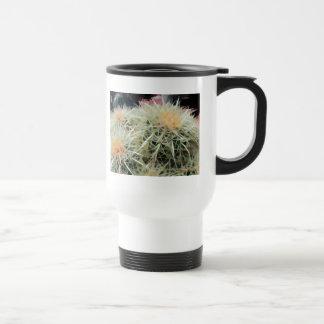 Cactus de barril espinoso tazas