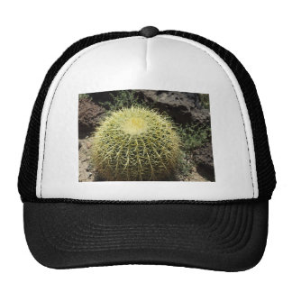 Cactus de barril gorros