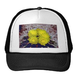 Cactus de barril gorras