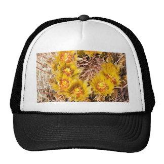 Cactus de barril gorra