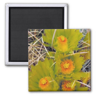 Cactus de barril imán para frigorífico