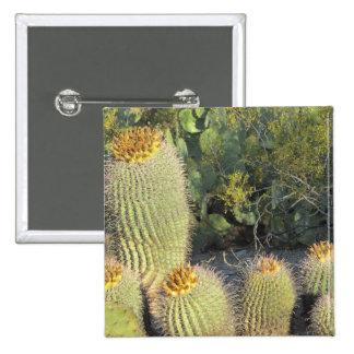 Cactus de barril pin cuadrado